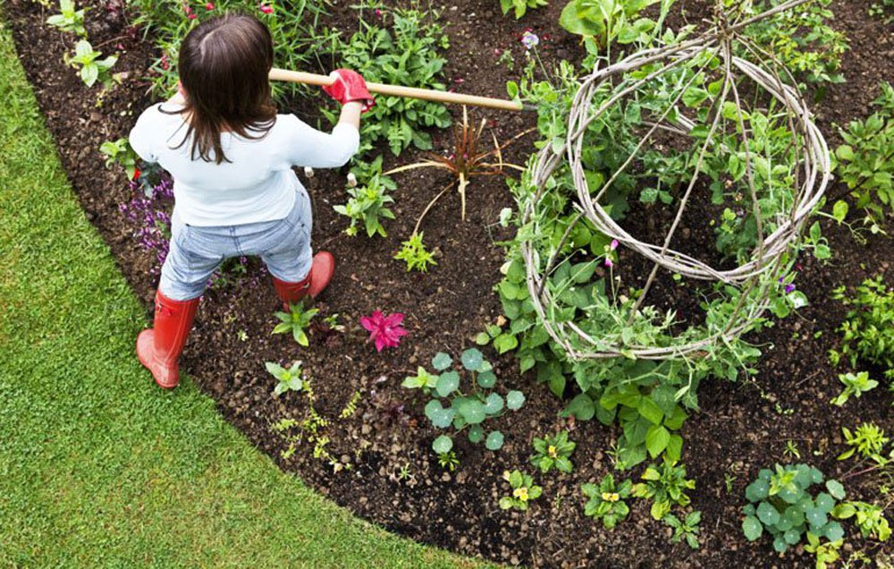 how to move garden plants